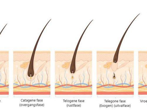 Uitleg: groei fases van de haren